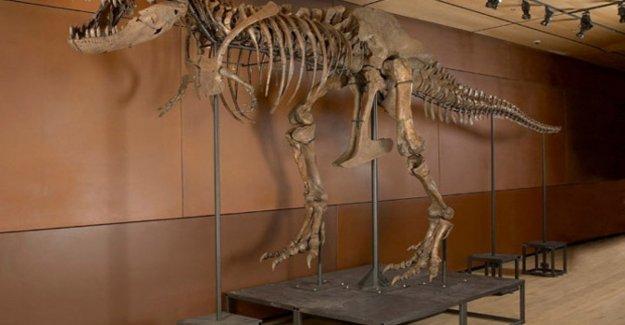 Bebé T-rex en la venta en Ebay por casi $ 3 millones