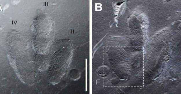 En Corea usted puede encontrar las primeras impresiones de la piel de los dinosaurios