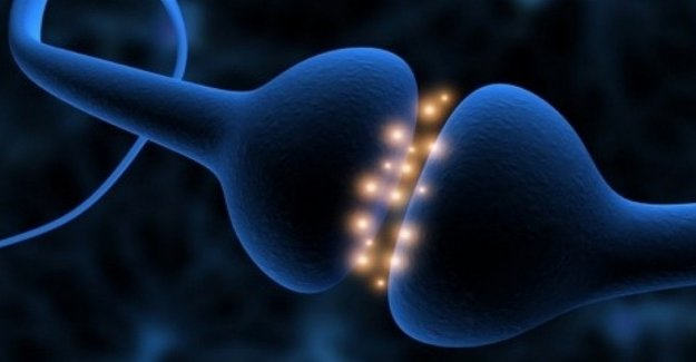 Identifica las neuronas espejo de las emociones