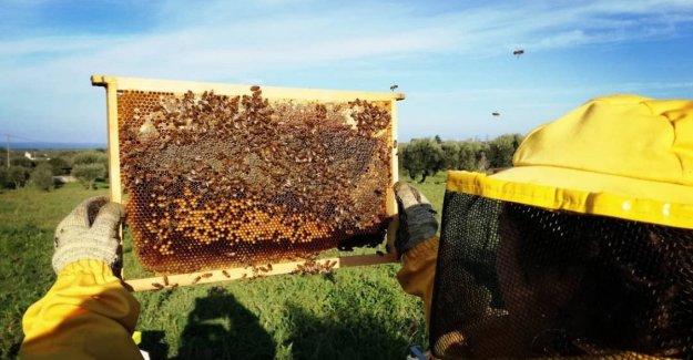 Un paseo entre las colmenas: en Bari abre un apiario con 200 mil insectos. Así que aprender a no tener miedo