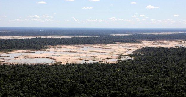 Amazon, de 30 años de pérdida de la vegetación que es 6 veces la de la ciudad de San Pablo