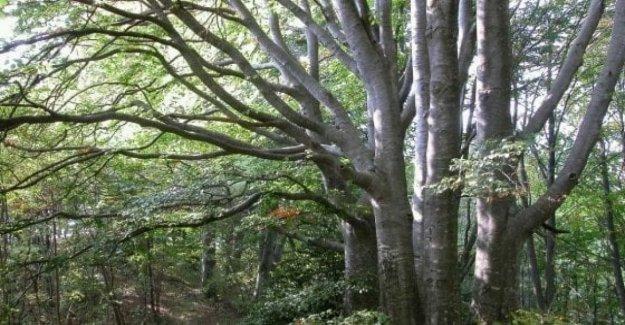 Alarma de Greenpeace: la agricultura industrial es comer los bosques del mundo