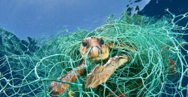 Con estas redes, vamos a salvar a miles de tortugas marinas en Italia