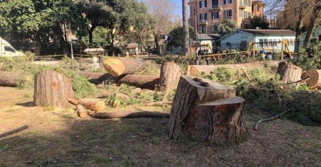 Necesitamos una ley para el manejo de los árboles en la ciudad