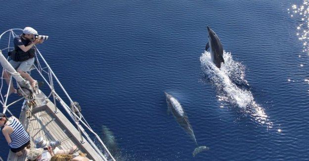 Con sus ojos abiertos y su smartphone, podemos ayudar a los delfines y las ballenas