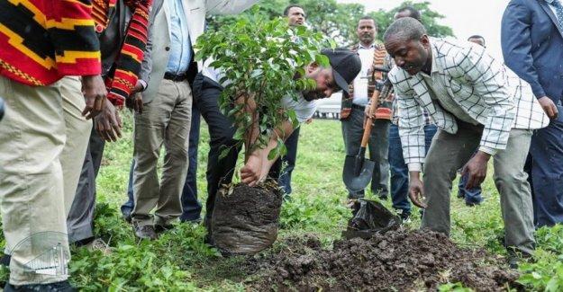 En Etiopía, la plantación de más de 350 millones de árboles en un día
