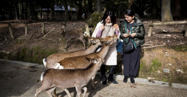 Japón, el venado sagrado para ser asesinado por los de plástico. La apelación a los turistas: No alimentar a los refrigerios para los animales
