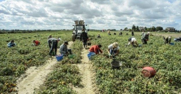 La comida, en Italia, 3 de los consumidores de cada 4 están dispuestos a comprar los productos de alimentación sin la explotación de los trabajadores