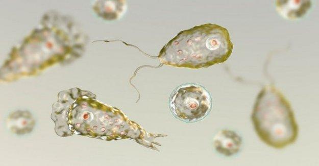 Las infecciones son raras en los estados Unidos, otra víctima de laameba come el cerebro