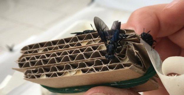 Los insectos y los biocombustibles, y los materiales del futuro