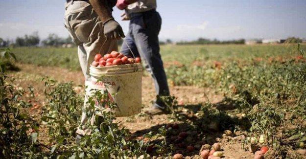 Caporalato, de Lazio, una ley contra la explotación de los trabajadores