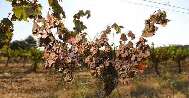Coldiretti: en 10 años 14 mil millones de dólares de daños a la agricultura