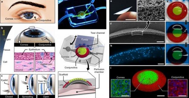 Creó un ojo artificial en 3D a partir de células humanas
