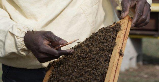 De la ciudad de tiendas de campaña en la apicultura, los cinco chicos se encuentran con un futuro por los Médicos para los derechos humanos