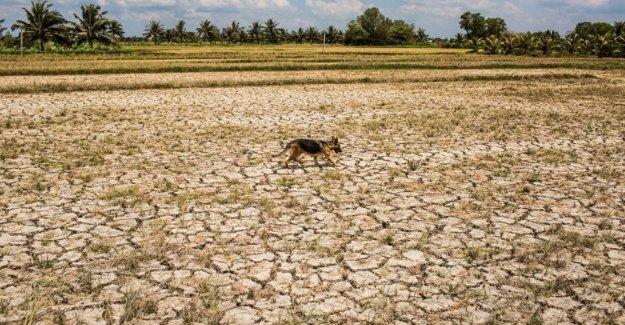 Laos, la sequía devastó los campos de arroz: cultivado sólo el 40% de la tierra disponible