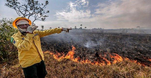 Los incendios en el Amazonas en tres ecorregiones de los más importantes en el planeta