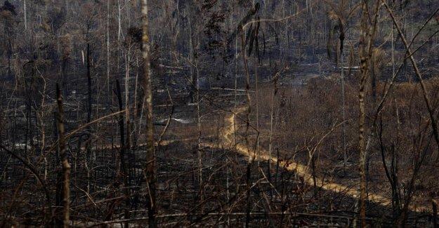 Los incendios en el Amazonas, la petición de Change.org supera los 5 millones de firmas