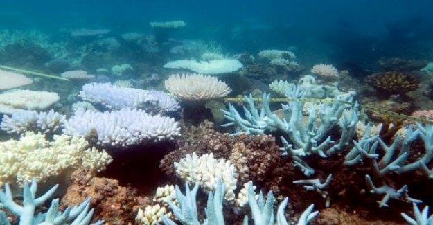 Sos Australia, la gran barrera de coral en riesgo al cambio climático