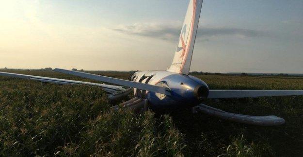 Un Airbus ruso aterriza de emergencia en un campo de trigo después de una colisión con una bandada de gaviotas