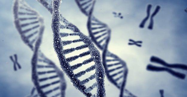 Un gen mutado en la base de algunos discapacidad intelectual