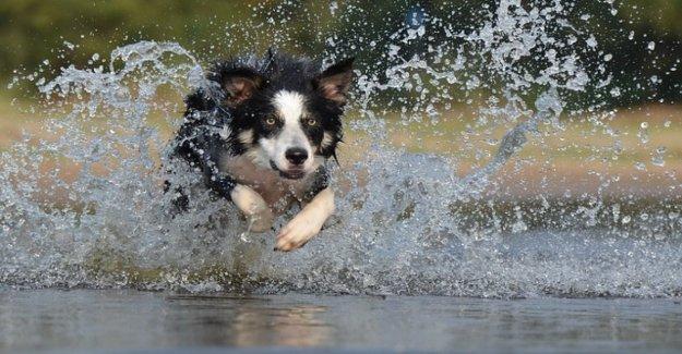 A cada perro su carácter: el comportamiento también tiene una base genética