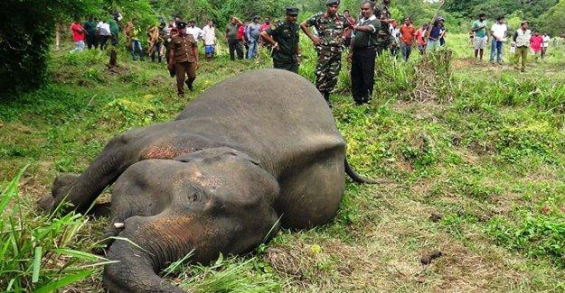 La masacre silenciosa de los elefantes en el mundo