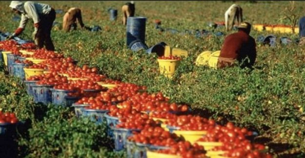 Los trabajadores agrícolas, La mala temporada: informe sobre las condiciones de vida y de trabajo de los trabajadores en la Capitanata