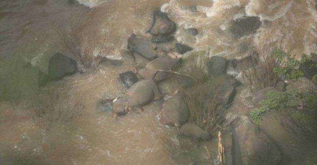 Tailandia, el bebé se ahoga en la cascada. Cinco elefantes mueren para guardar