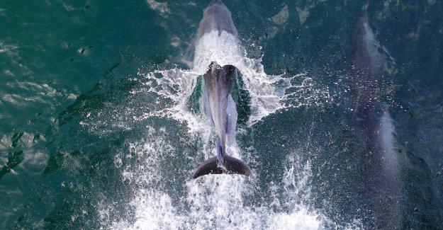 TripAdvisor, el punto de inflexión, el pro-de cetáceos. De impedir la venta de entradas para las atracciones con las ballenas y los delfines