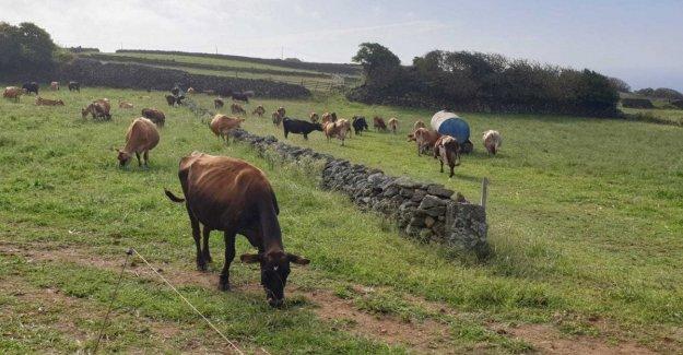 Accesibilidad, derechos sociales y el respeto por el medio ambiente: Azores paraíso