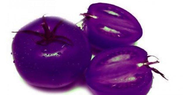 El tomate rojo para el caso, él nació púrpura