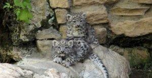 Onu: un millón de especies en riesgo de extinción a causa del hombre