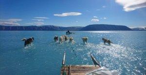 Groenlandia, el hielo se derrite. Y los perros de trineo correr sobre el agua
