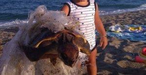 Cerdeña, el hijo, para salvar a una tortuga atrapada por el plástico