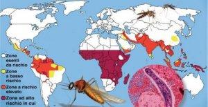Listo el atlas de la célula de la malaria, que abre el camino a nuevos tratamientos
