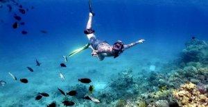 La flora marina y obtener lo esencial de oxígeno para la vida en los océanos super caliente