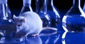 Manifiesto de los científicos a la defensa de la experimentación animal