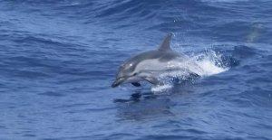Se duplicó el avistamiento de los cetáceos en los mares italianos