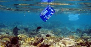 Ispra: En las redes de los pescadores y más desechos de los peces