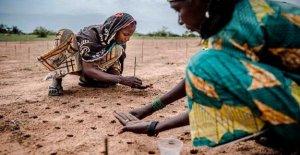 África, 52 millones de personas corren el riesgo de morir de hambre a causa del cambio climático