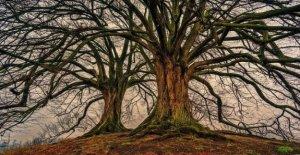 Día de los árboles, 820mila de hectáreas de bosques en áreas protegidas