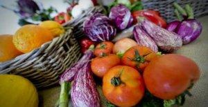 La dieta mediterránea nos ayuda a comer sano y menos desperdicio