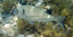 Los antidepresivos que terminan en el mar de cambiar el comportamiento de los peces