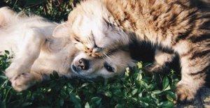 Los perros, los gatos y la diabetes: 280mila amigos de cuatro patas que la sufren
