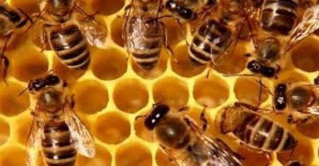 Alarma, Coldiretti: la recolección de la miel se reduce prácticamente a cero