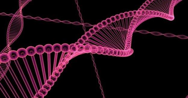 Creado en el laboratorio, una bacteria con el Adn completamente sintético