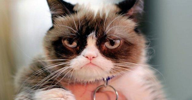 Y' muertos de mal humor, el gato, la estrella de la web