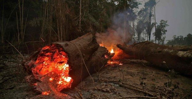 Amazon, Bolsonaro se replantea: Listo para aceptar la ayuda extranjera