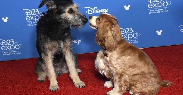 Disney la tropa de las tropas de la nueva plataforma, desde Star Wars a 'la Dama y el Vagabundo'