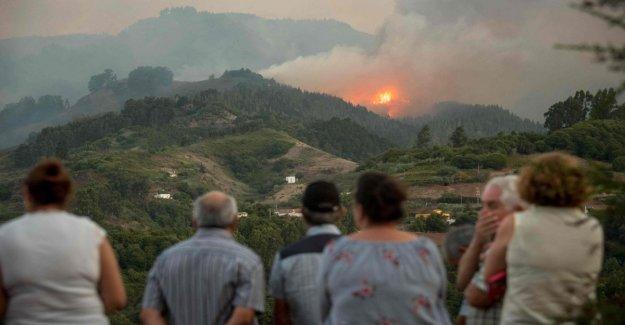 Gran Canaria devastada por un gran incendio: 8.000 personas evacuadas